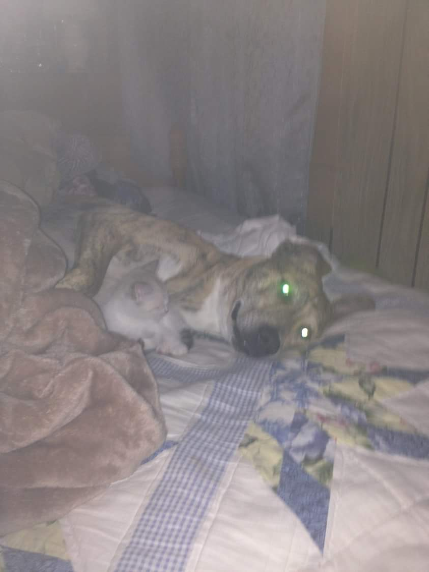 Image of Rosco, Lost Dog