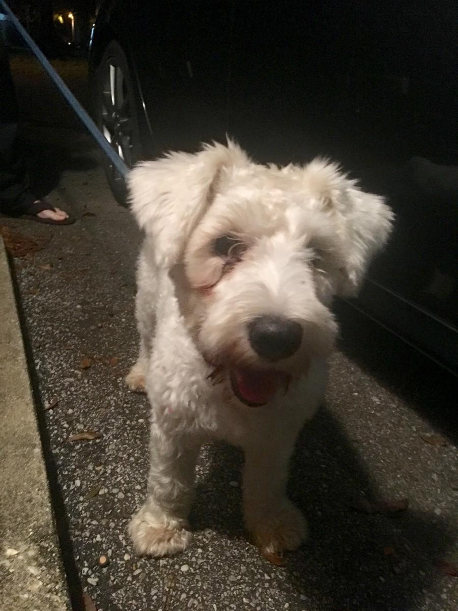Image of Unknown/Found , Lost Dog