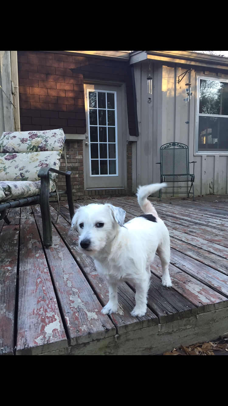 Image of Bailey, Lost Dog