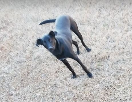 Image of unkown, Found Dog