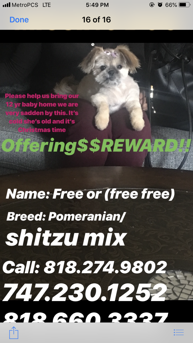 Image of Free, Lost Dog