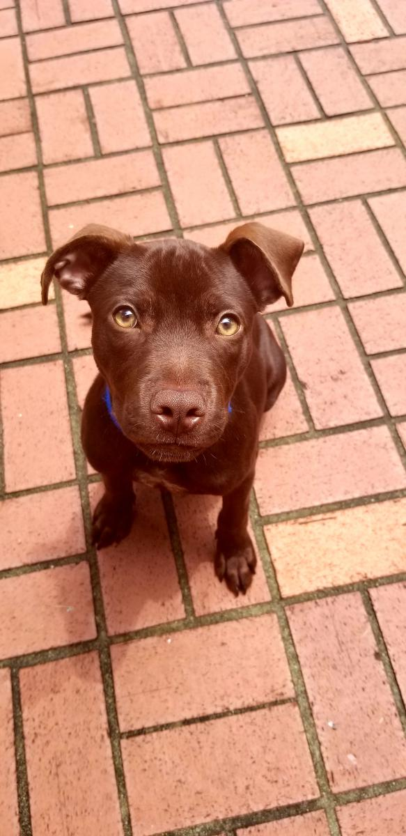 Image of Shadow, Lost Dog