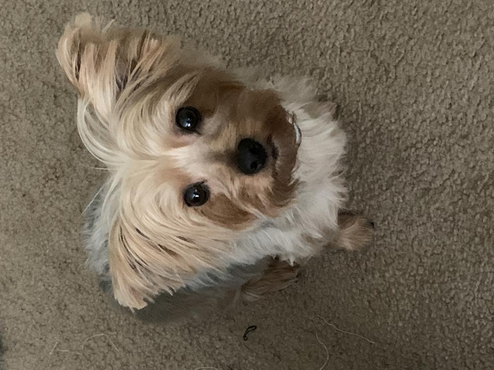 Image of Zoey, Lost Dog