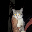 Image of unknown, Found Cat