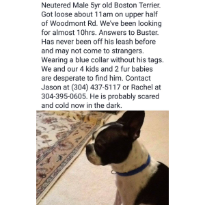 Image of Buster, Lost Dog
