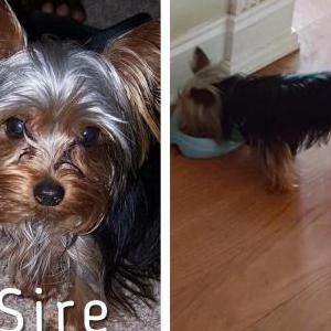 Image of Sire, Lost Dog