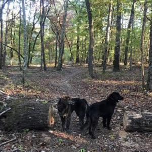Image of Radley and Scout, Lost Dog