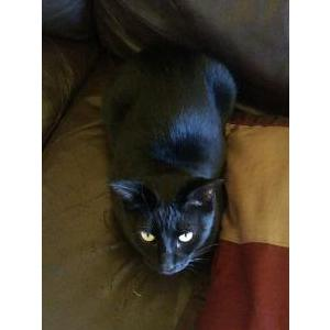 Image of Panther, Lost Cat