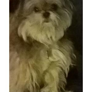 Image of little one, Lost Dog