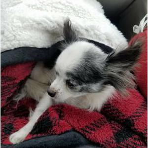 Lost Dog Peke