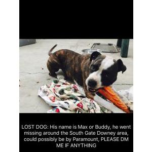 Lost Dog Max Torres