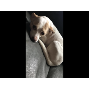 Image of Cookie, Lost Dog