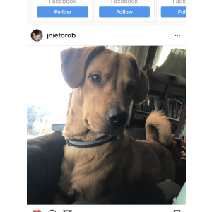 Lost Dog Duke