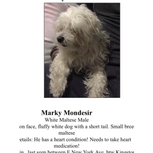 Image of Marky, Lost Dog