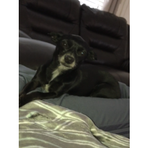 Image of Chiquis, Lost Dog