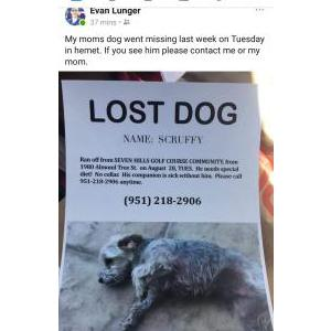 Image of Scruffy, Lost Dog
