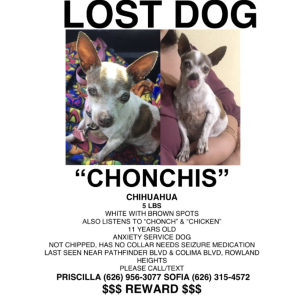 Image of Chonchis, Lost Dog