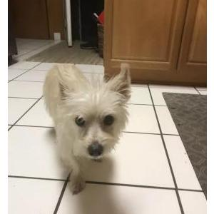 Lost Dog Bella