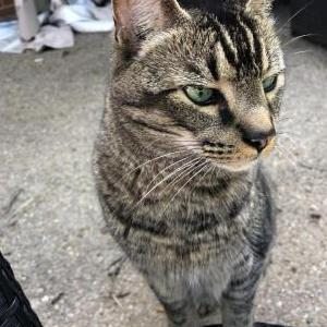 Image of Luca, Lost Cat