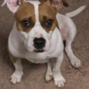 Image of Carlie, Lost Dog
