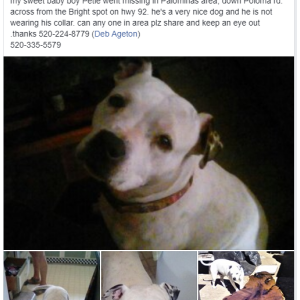 Image of Petie, Lost Dog