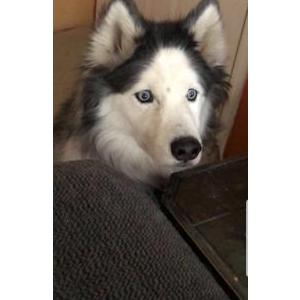 Image of Sky, Lost Dog