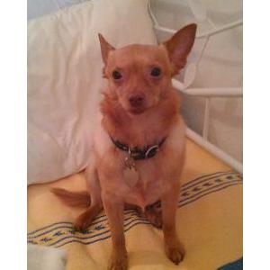 Image of Duende, Lost Dog