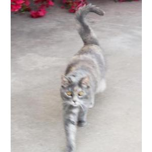 Image of Kissey, Lost Cat