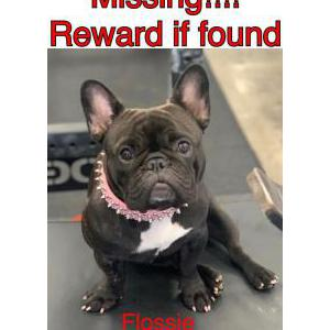 Lost Dog Flossie