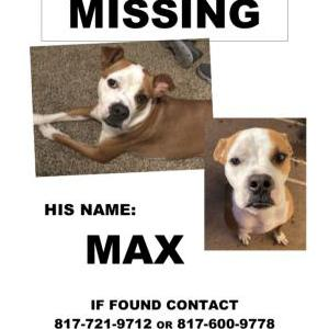 Image of Max, Lost Dog