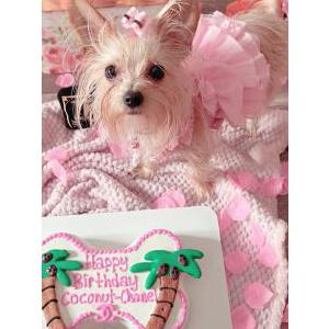 Image of Coconut-Chanel, Lost Dog
