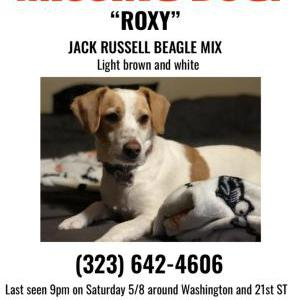 Image of Roxy, Lost Dog
