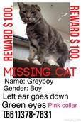 Image of Greyboy, Lost Cat